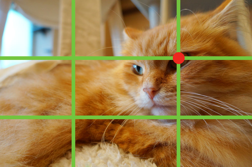 猫の写真の撮り方